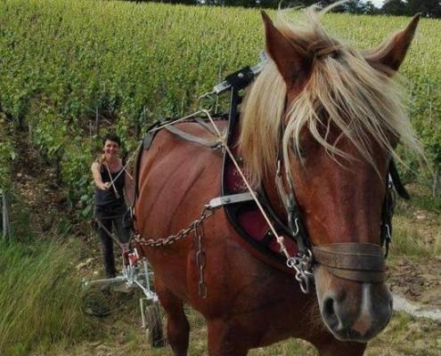 Randonnée viticole bourgogne