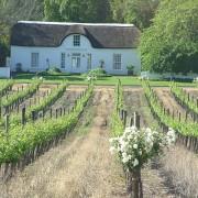 vins sud-africains