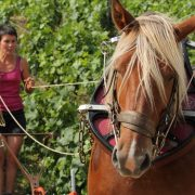 team building en bourgogne team building original team building cheval séminaire